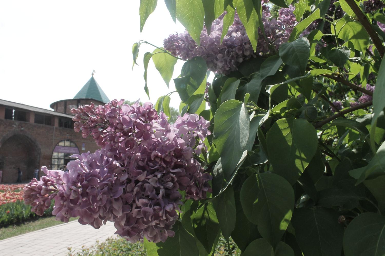 Работы по озеленению территорий продолжаются в Нижнем Новгороде - фото 2